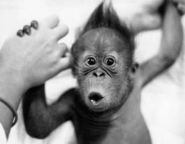 Bilder von stars baby affen - Petit singe rigolo ...